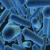 gambar bakteri