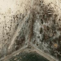 jamur pada dinding